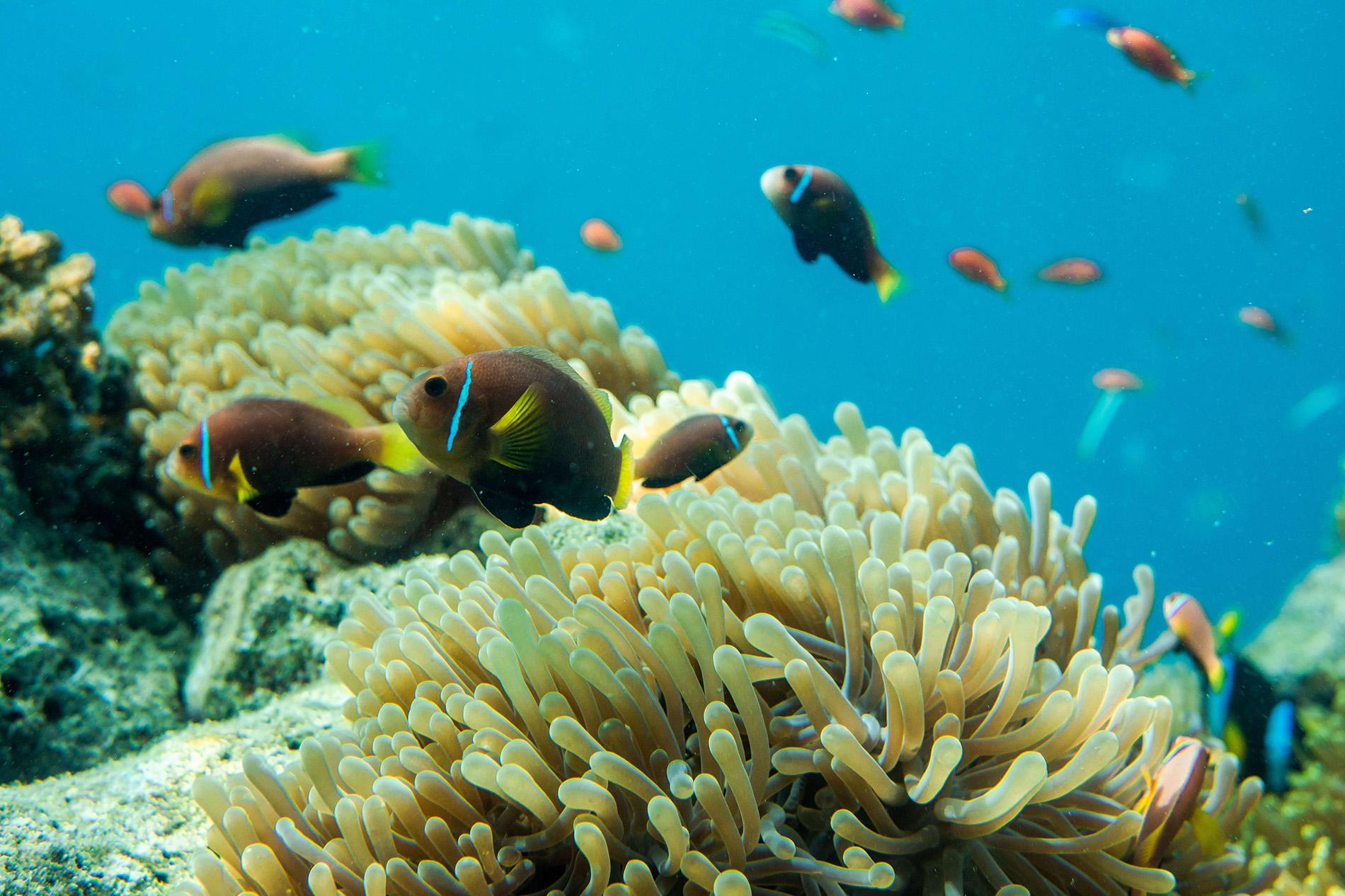 Biện pháp xử lí nước giúp cá phát triển bình thường