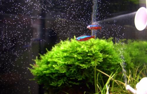 Chức năng của máy thổi khí mini trong bể cá cảnh