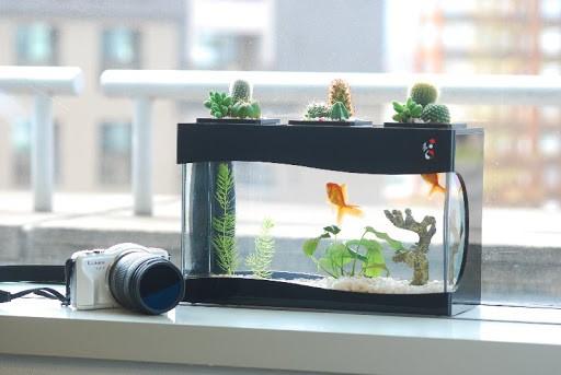 Có nên sử dụng máy thổi khí oxy cho bể cá