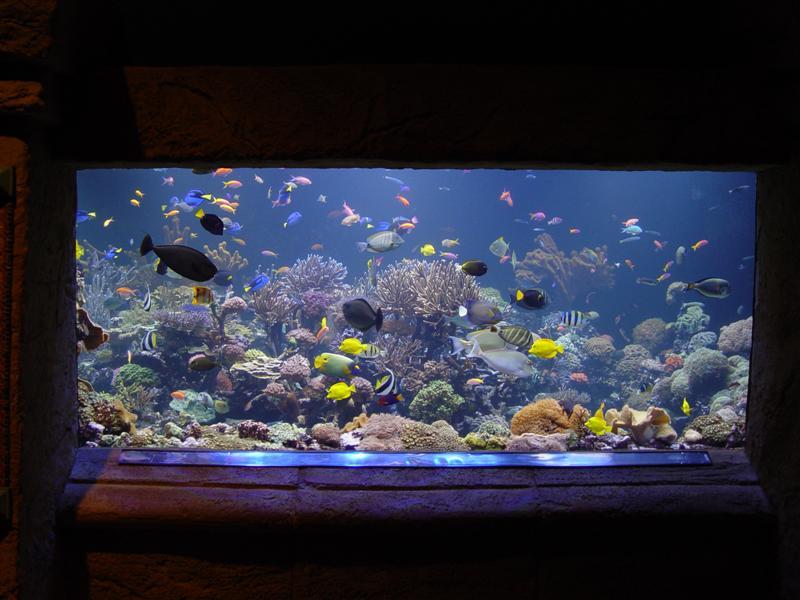 Những chia sẻ dành cho người mới nuôi cá thủy sinh