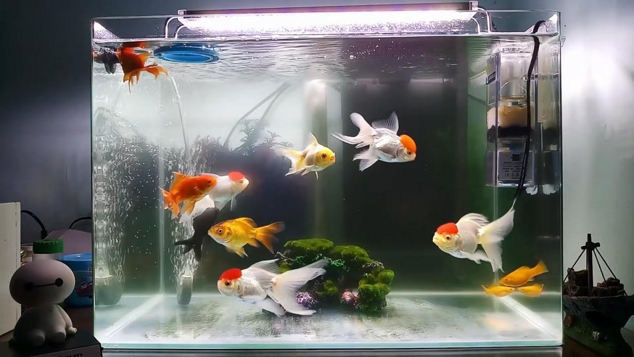Tác dụng hữu ích khi sử dụng máy thổi khí oxy cho bể cá